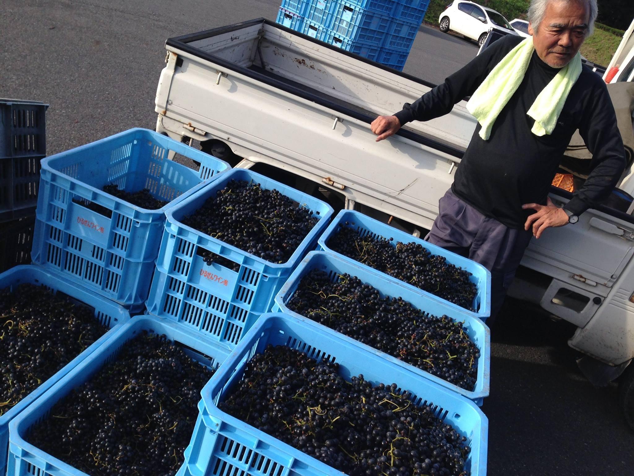 蒜山ワイン葡萄収穫