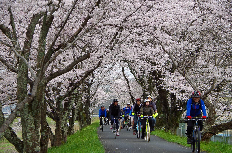 桜×スイーツ散走