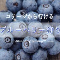 蒜山ブルーベリー