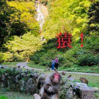 神庭の滝の猿
