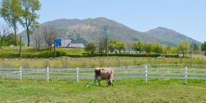 スライド用夏の蒜山ジャージー